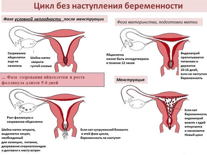 При первом сроке беременности месячные